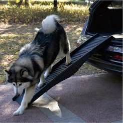 pet dog ramp